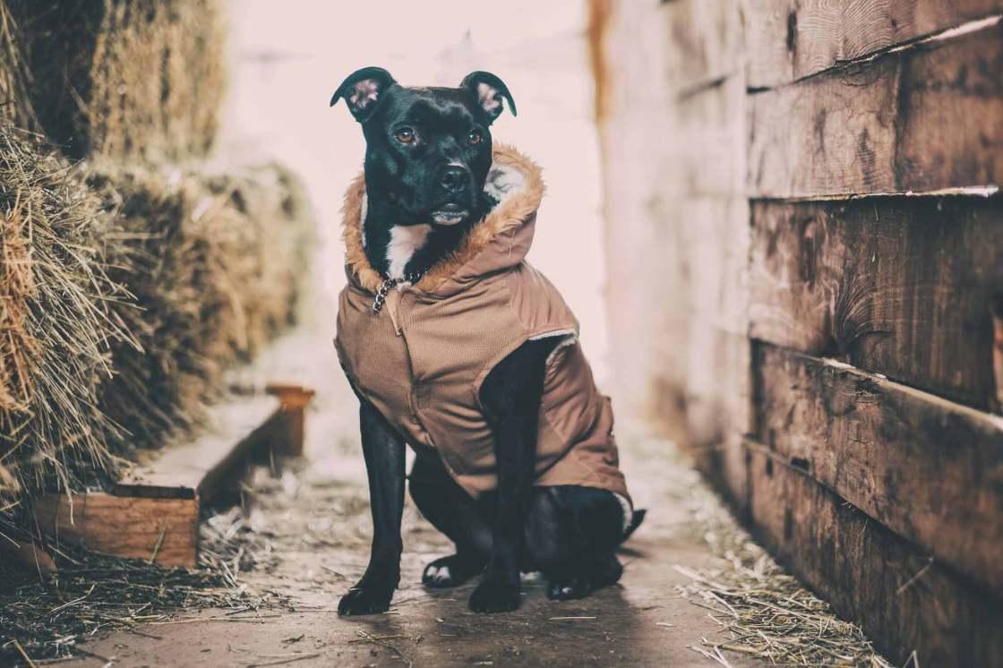 Choosing the best pet photographer